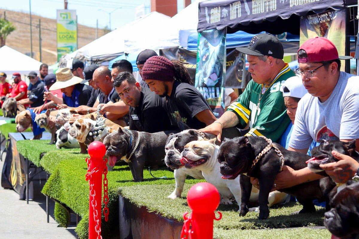 Exhibición de Perros